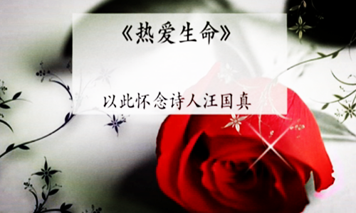 现代诗歌牛寺的诗
